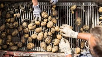 In der Schweiz gibt es genug davon: Kartoffeln.Gaetan Bally/Keystone