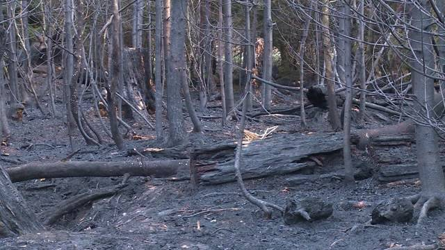Brandursache: Menschliches Fehlverhalten