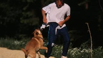 Immer wieder kommt es zu kritischen Situationen zwischen Joggern und Hunden.Symbolbild: Photoshot