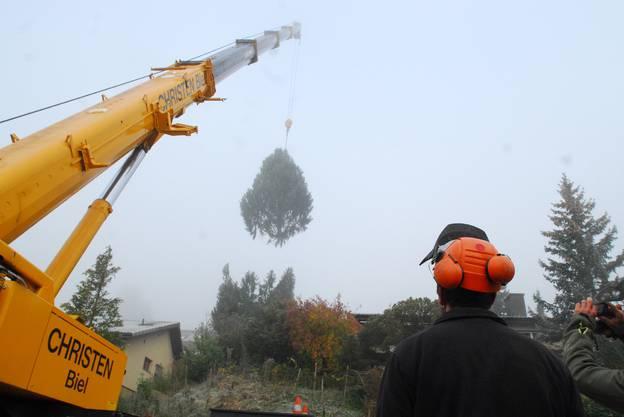 Es geht los, der obere Teil des Baumes ist gekappt