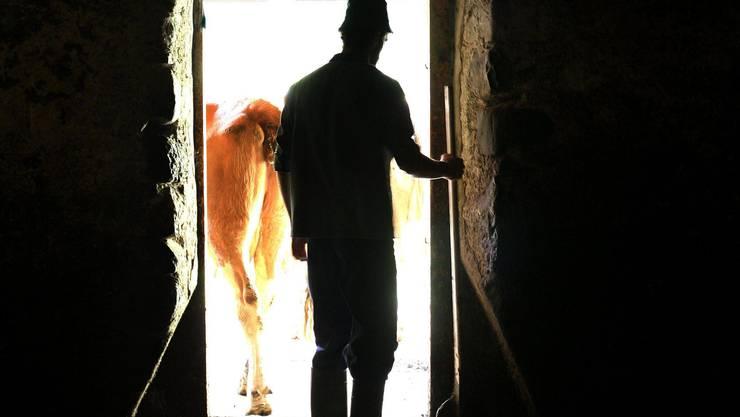 Viel Arbeit, immer wenig Verdienst:Die Zahl der Bauern, die in eine Negativspirale geraten, nimmt zu.