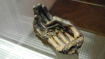Die Reproduktion der Schwurhand von Rudolf von Rheinfelden ist im Fricktaler Museum ausgestellt.