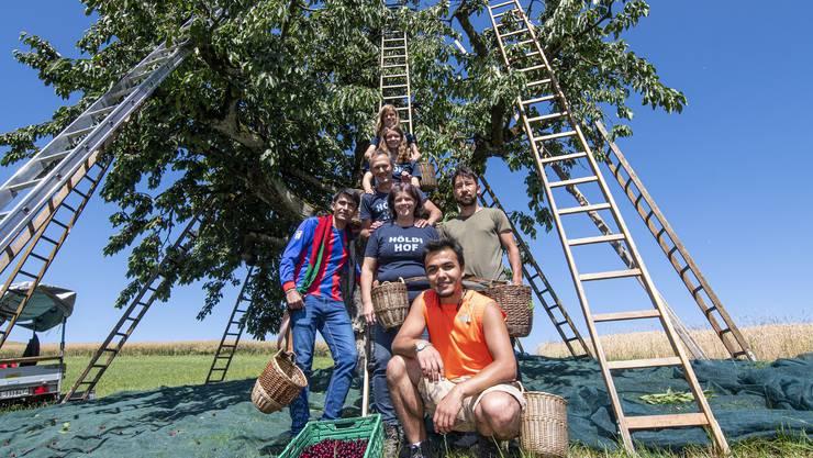 Familie Schweizer bekommt bei der Chirsiernte Hilfe von Flüchtlingen aus Afghanistan.