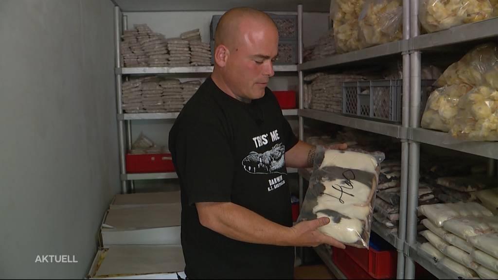 Tote Mäuse & Co.: Reptilien-Nahrung wird wegen Päckli-Flut zu spät geliefert