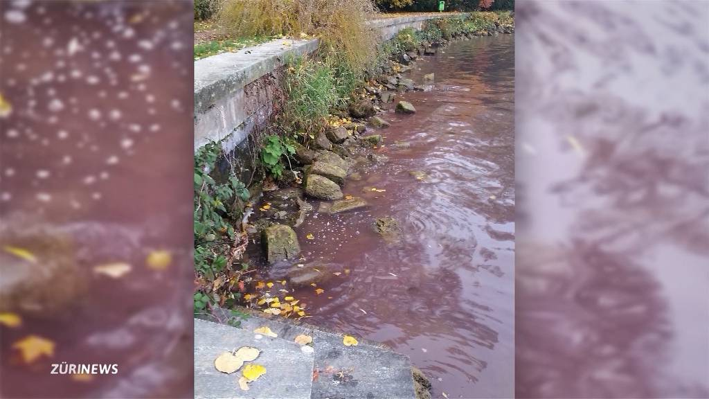 Blaualgen im Zürichsee bei Horgen und Wädenswil entdeckt