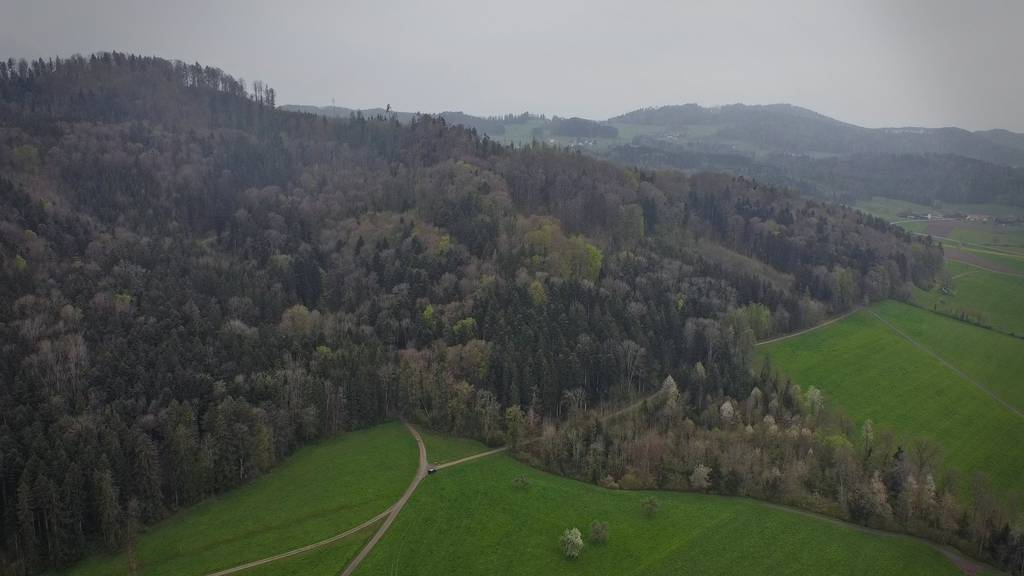 Im Thurgau entsteht ein Urwald – als Lebensraum für Tiere und Pflanzen