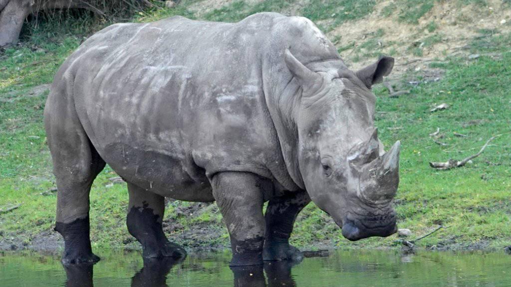 Schweiz gegen Lockerung des Nashorn-Schutzes