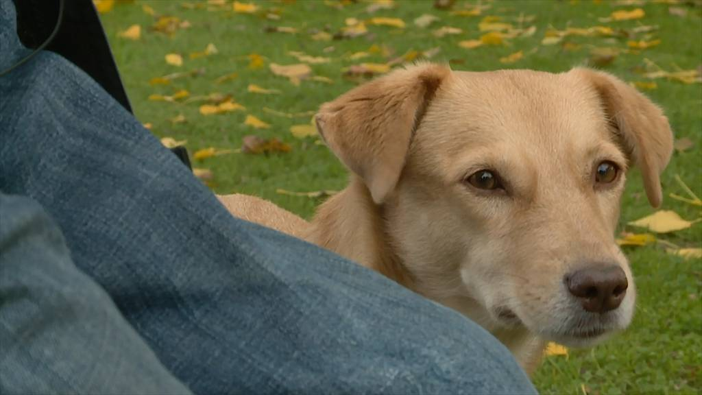 «Hundezonen»: Stadt Zürich legt sich mit den Hündelern an