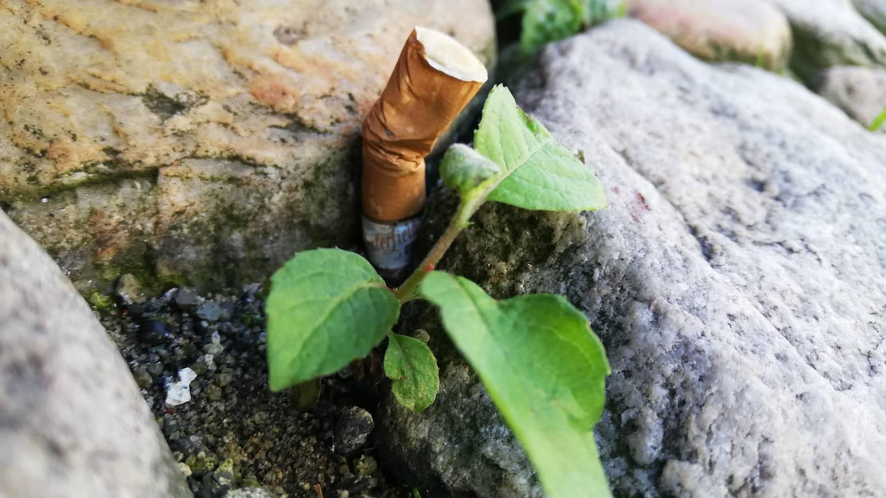 Stop 2 Drop Aktion - Zigarettenstummel, Umweltverschmutzung