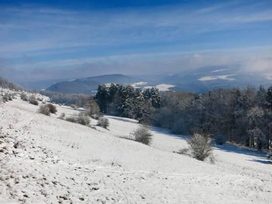 Blauenweide im Schnee