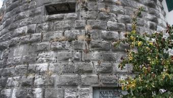 Hat die Stadt Solothurn zu viel Gift beim Burristurm eingesetzt?