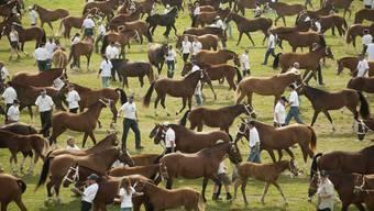 Freiberger-Pferde am Marche-Concours in Saignelegier (Archiv)