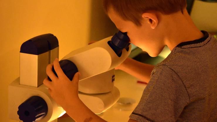 Unter dem Mikroskop werden kleine Welten plötzlich gross.