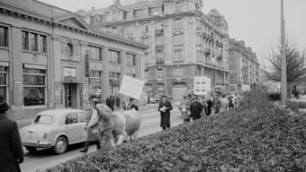 Im Dezember 1963 zogen Fricktaler Bauern mit ihren kranken Kühen durch Zürich. Sie wollten vor dem Sitz der Alusuisse gegen die Emissionen demonstrieren. Dank eines Tipps riegelte die Polizei die Gegend weiträumig ab.