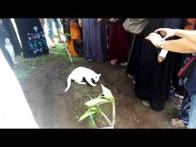 Die Katze des verstorbenen Halters aus Malaysia taucht bei der Beerdigung auf und will das Grab nicht verlassen.