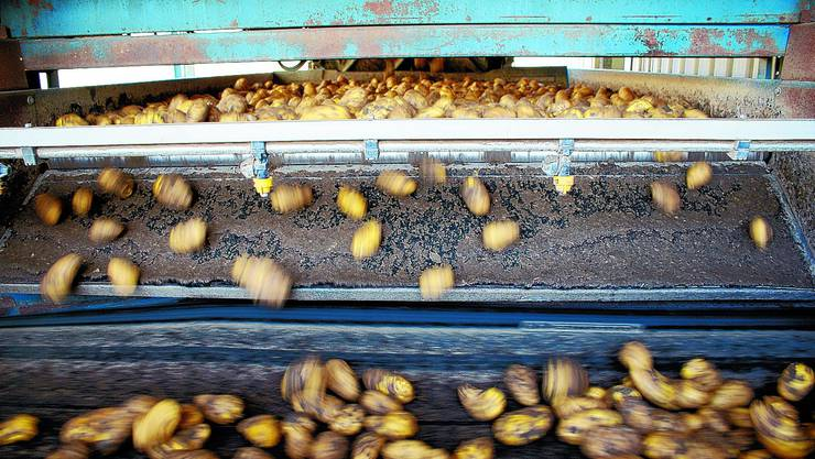 Kartoffeln.