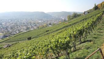Wümmet 2015 – ein Einblick in die Traubenernte in der Region Baden.