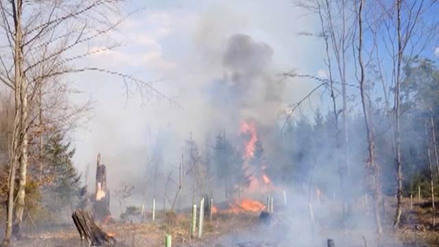 Erhöhte Waldbrandgefahr in Bern