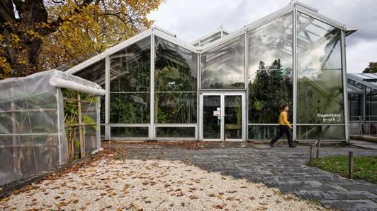 Es nagt der Zahn der Zeit: Das alte Tropenhaus im Botanischen Garten bietet nicht mehr die optimalen Bedingungen für exotische Pflanzen.