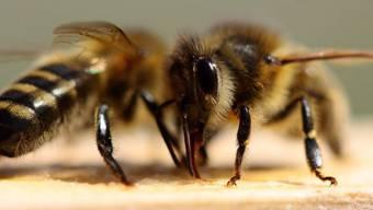 Der Pfad gibt den Besuchern Einblick in die Welt der Bienen. (Symbolbild)