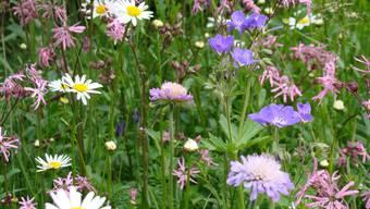In Fislisbach blühen bald mehr Blumen. (Symbolbild)