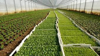 In Birmenstorf sollen rund 13 Hektaren Ackerland in eine Spezialzone für Treibhäuser umgezont werden.