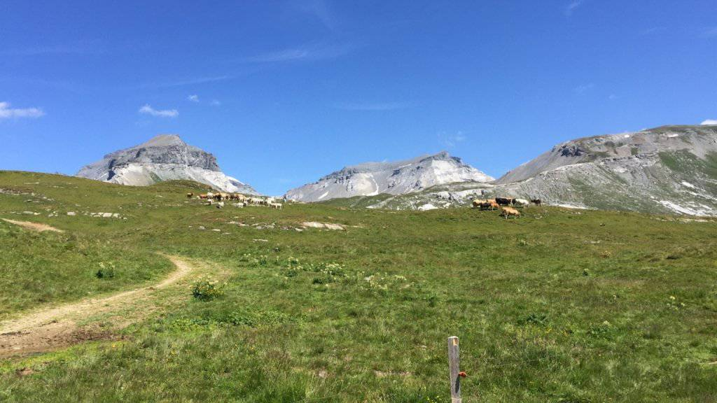 Die Wanderin wurde auf dieser eingezäunten Weide oberhalb des Laaxer Bergrestaurants Nagens von mehreren Kühen totgetrampelt.