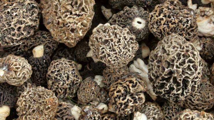 Morcheln als Ursache für zwei Lebensmittelvergiftungen am Unispital Lausanne können laut den Behörden ausgeschlossen werden. Im Bild sind frisch gepflückte Pilze. (Symbolbild)