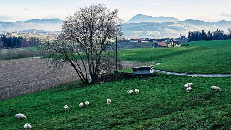 Die Flur Bethlehem an der Grenze zu Oberrüti in Dietwil.