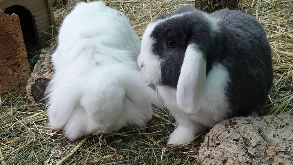 Bena & Jerra