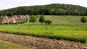 Der Kantonsrat hat bei der Umsetzung der Kulturlandinitiative nicht im Sinn des Volkes gehandelt. Im Bild die Landwirtschaftszone am Dorfrand von Geroldswil.Key