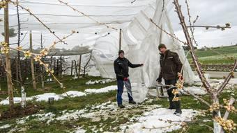 Die Kirschen im Frühling vor dem Winter schützen: Samuel und Jonathan Schaffner bereiten ihre Anlage auf eine weitere Frostnacht vor.