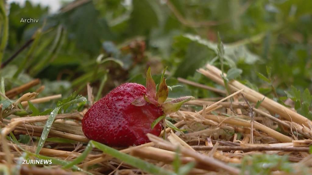 Drohen bald Lieferengpässe bei Schweizer Gemüse, Obst und Getreide?