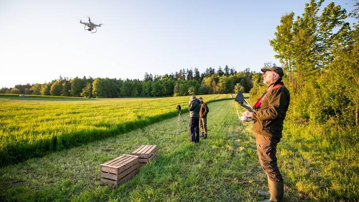 Drohnen-Suchflug zur Rettung von Rehkitzen in Nennigkofen: Jäger Peter Wyss startet die Drohne. So sucht er das Feld im Hintergrund nach versteckten Rehkitzen im Gras ab.