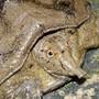 Eine Schildkröte mit Rüssel, die bis zu diesem Zeitpunkt noch völlig unbekannt war.