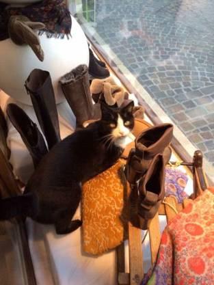 Toulouse im Schaufenster des Schuhladens Head over Heels.