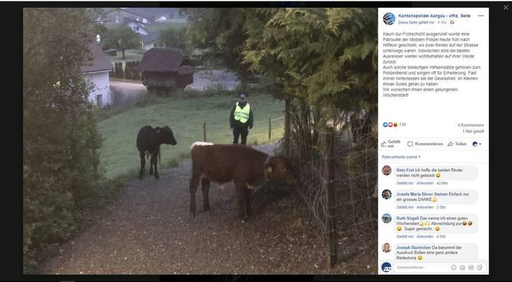 Hilfikon AG, 29. April: Zwei entlaufene Rinder werden inHilfikon auf der Strasse gesichtet. Die Kantonspolizei wird um 5.20 Uhr alarmiert. Beamte treiben die Tiere auf die Weide zurück. Zu Schaden kam niemand.