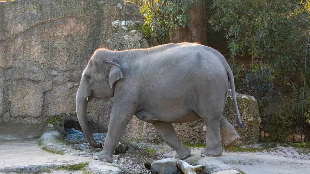 Elefantenbaby stirbt kurz nach der Geburt