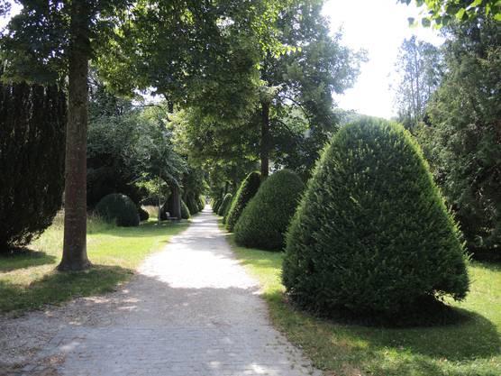 Im Badener Stadtfriedhof kann man Tischtennis spielen
