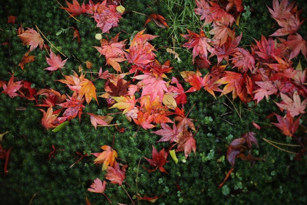 Wunderschöner Herbst