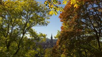 Das Berner Münster hinter sich verfärbenden Bäumen und unter strahlendem Himmel.