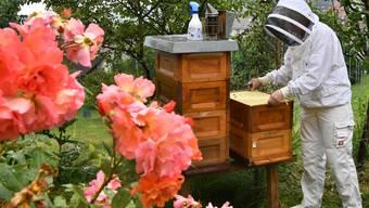Imkerin Maria Pongratz aus Erlinsbach SO zeigt ihren Bienenstock