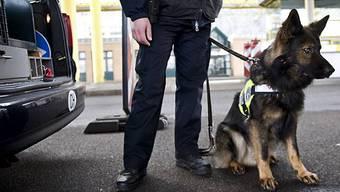 Drogenspürhund findet Heroin und Streckmittel.