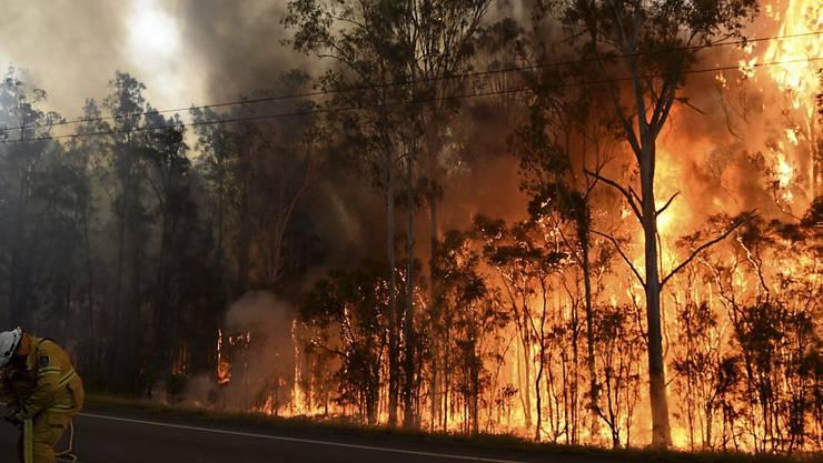 Im Westen Australiens ist ein Buschfeuer ausser Kontrolle geraten. (Archiv)