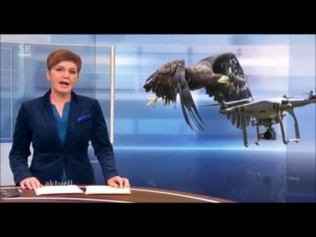 Adler fängt Drohne