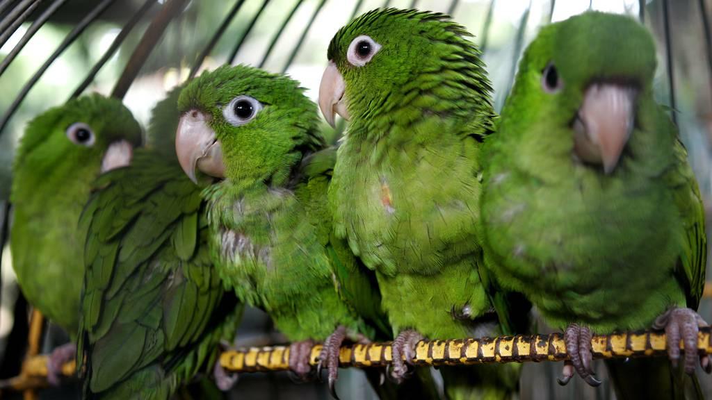 Bundesrat sagt illegalem Tierhandel den Kampf an