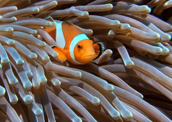 Auch die Tochter frönt dem Hobby des Vaters: Dieses Unterwasserfoto hat Strähl selbst gemacht.
