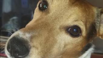 Der verstorbene Hund «Rocky.