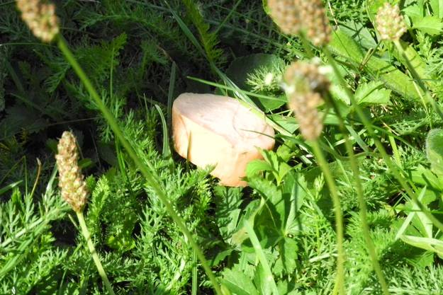 Ein Wurststück im Gras.