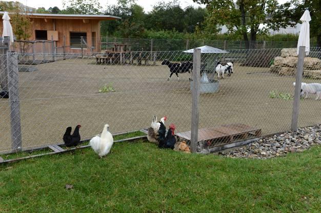 Die Tiere haben eine grosse Bewegungsfreiheit.